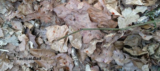 Auf dem Waldboden waren überall, unter der Schusslinie, kleine rote Tropfen vom Reizstoff.