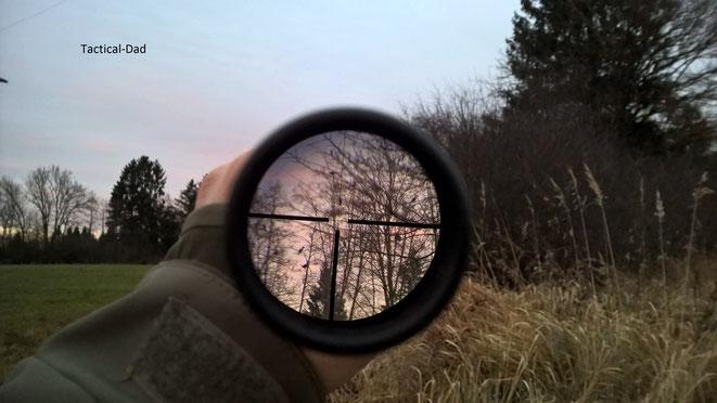 Kormorane am Schlafbaum. Pünktlich zum Sonnenuntergang.