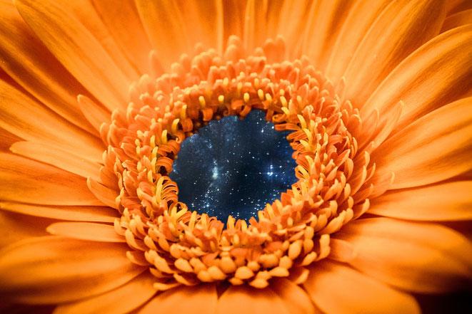 花びらブラックホールイメージ