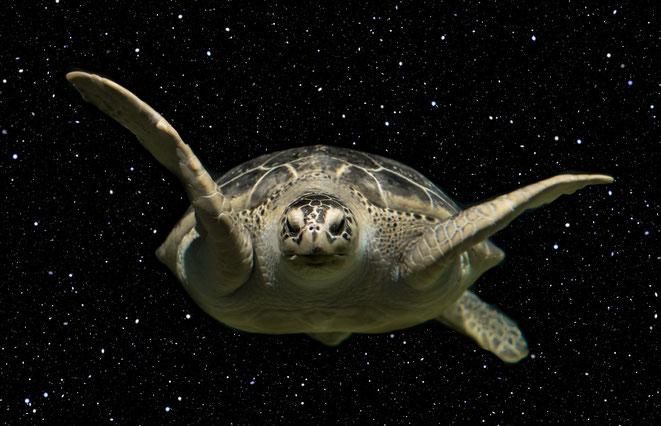 宇宙空間をただよう亀-ウラシマ効果イメージ