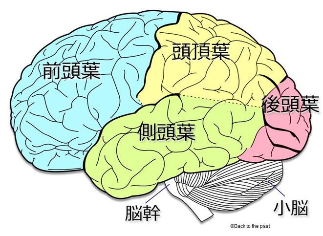 脳の機能図
