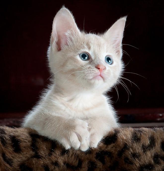 異次元を見る猫イメージ