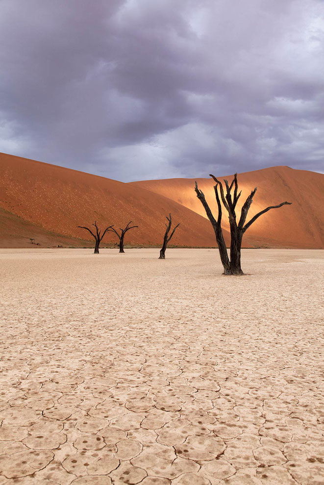 Dead Vlei trees and raindrops with sunshine in the dunes, Desert, Namib Naukluft Park, Namibia, 1217x1820px