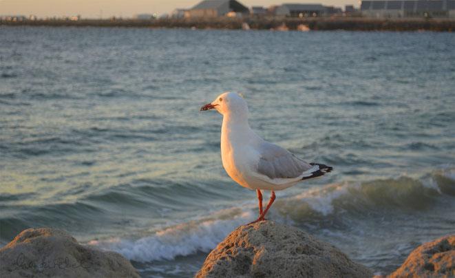 honourebel basis unter der oberflaeche sinnerfuellung bild zeigt moewe am strand bei sonnenuntergang