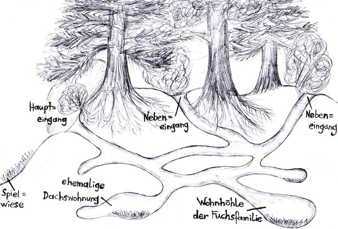 Der Fuchsbau von Rotbarts Familie (Skizze mit Bleistift)