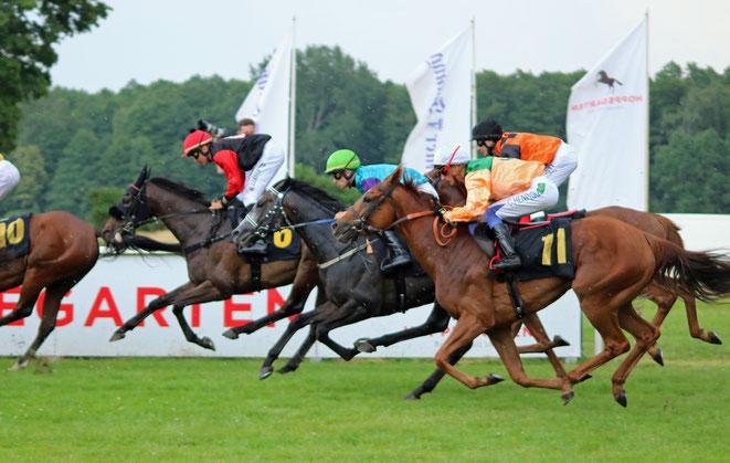 Bild: Pferde im Rennen, Rennbahn Hoppegarten