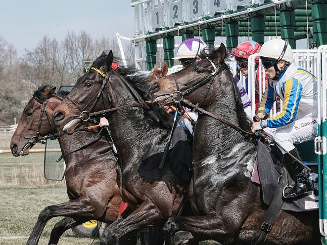 Bild: Pferde beim Start auf der Pferderennbahn Bremen