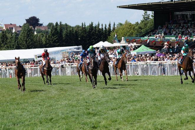 Pferde im Rennen auf der Rennbahn in Bad Harzburg