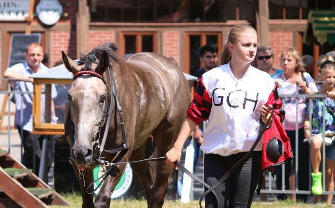 Pferd vom GaloppClupp Hoppegarten in Leipzig