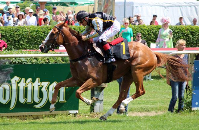 Bild: Pferde im Ziel, Rennbahn Hoppegarten
