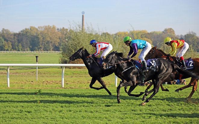Bild: Pferde im Rennen auf der Rennbahn Halle (Saale)