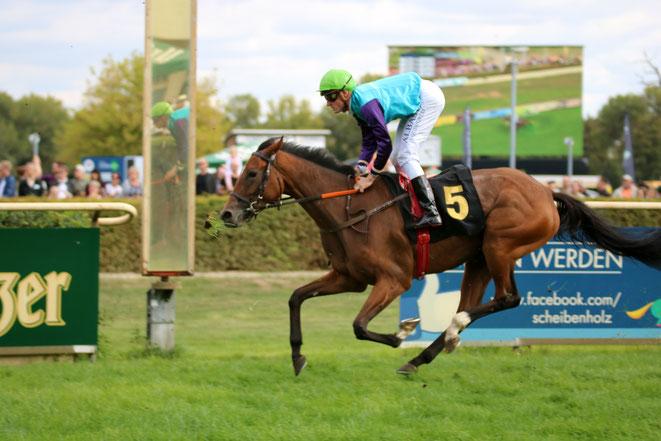 Pferde im Rennen, Rennbahn Magdeburg
