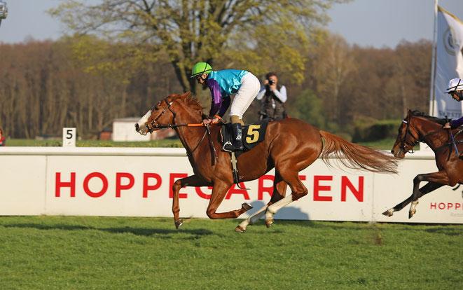 Bild: Rennpferd im Rennen, Rennbahn Hoppegarten bei Berlin