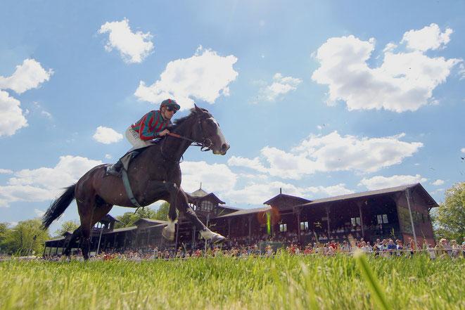 Bild: Pferderennen auf der Rennbahn Dresden