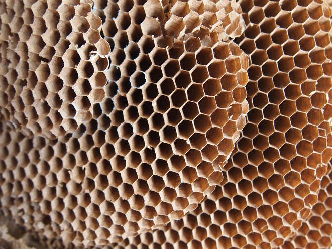 見事な正六角形の蜂の巣。