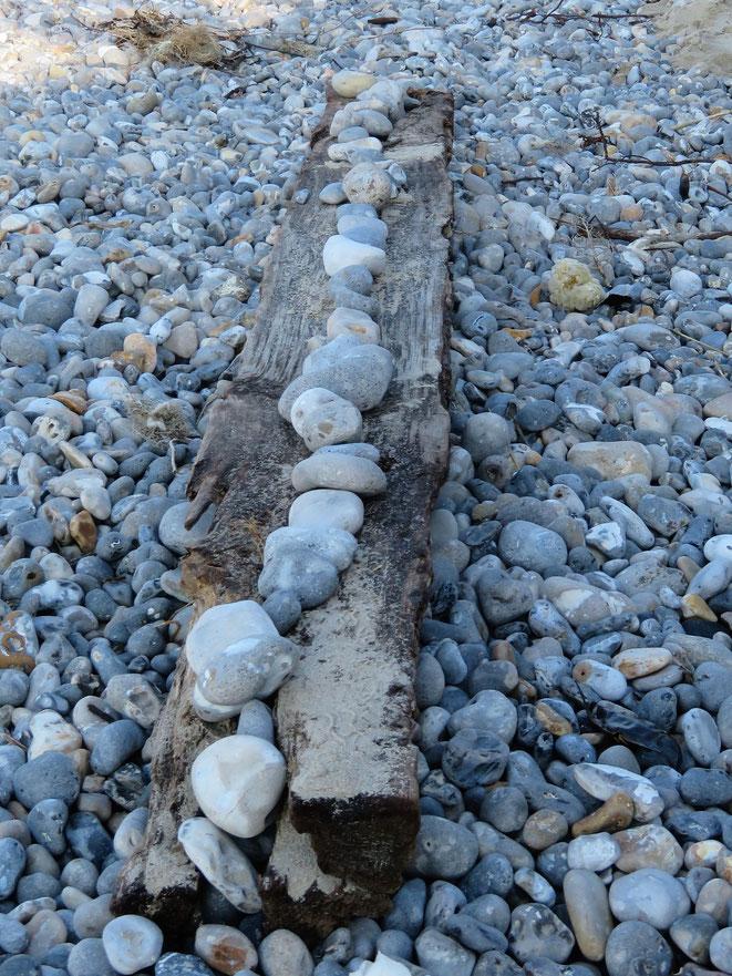 Sortie nature baie de Somme et jeux de  piste Atout'Anim