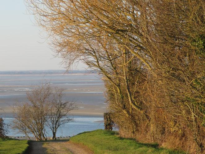 Sortie nature baie de Somme Atout'Anim