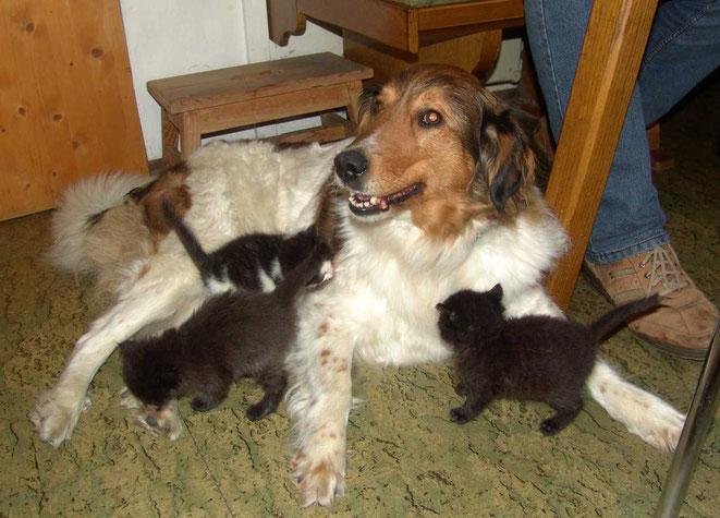 Jacky als Katzen-Babysitter (Hund vom Armin Melcher)