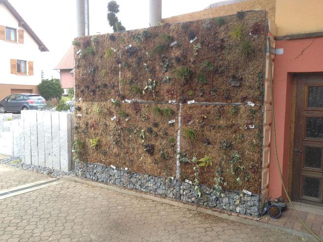 Geoenergies propose le mur végétalisé Végéteau adapté au procédé MURDEAU