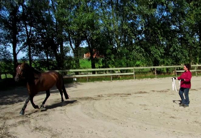Loswerken met een paard in Heiloo met de freestyle techniek van Emiel Voest.