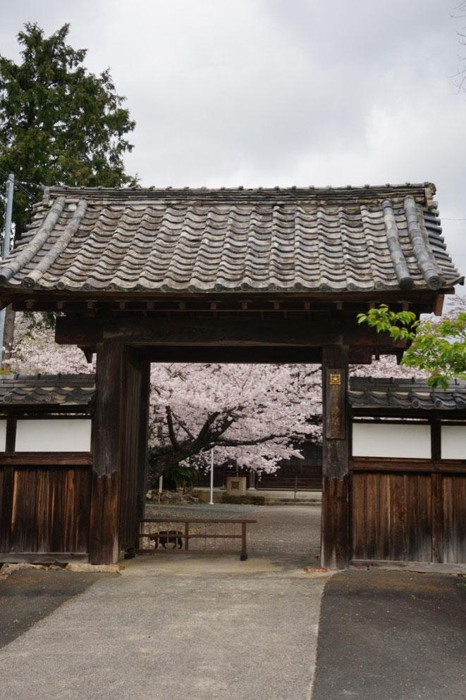山門と桜がよく似合います