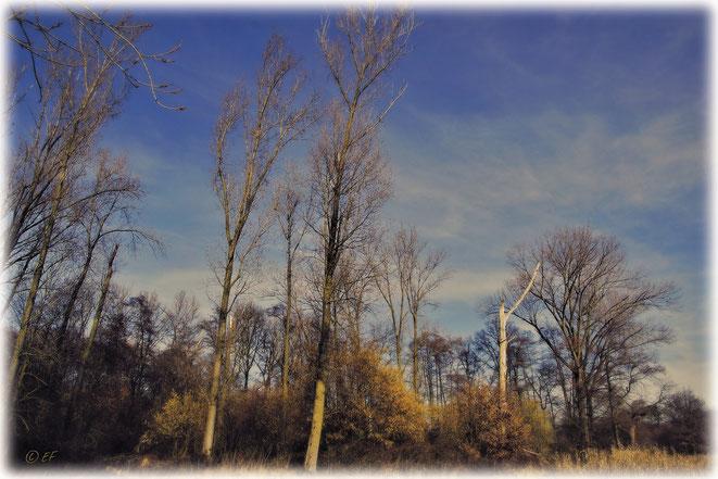 Lebende & tote Bäume sorgen für Artenvielfalt