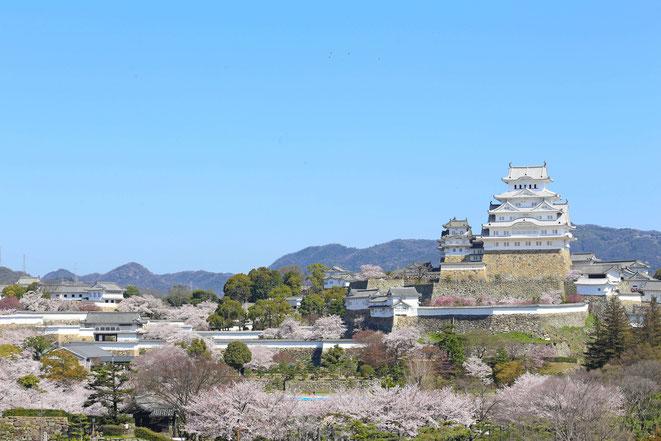 行政書士ふくろう事務所代表の出身地、兵庫県の姫路城。