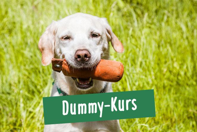 Hund trägt Dummy im Maul