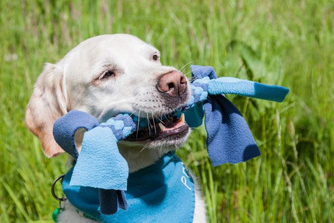 Hund trägt Fleece Zergel