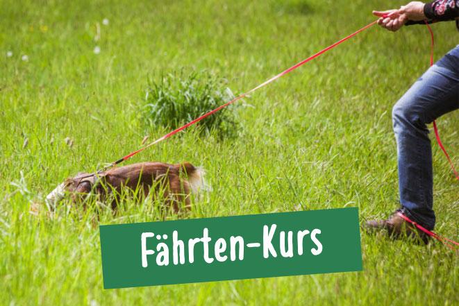 Hund bei Fährtensuche