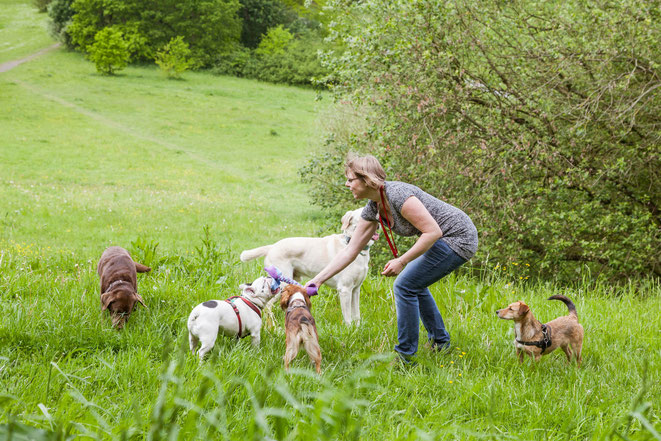 Rebecca spielt mit Hunden