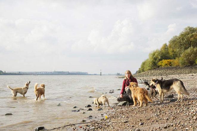Spaziergang mit Hunden an der Elbe