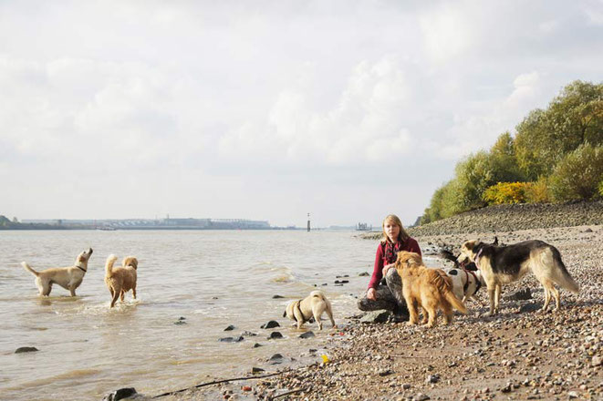 Hundetrainerin Rebecca beim Spaziergang mit Hunden aus ihrer Gassi Gruppe in Hamburg an der Elbe