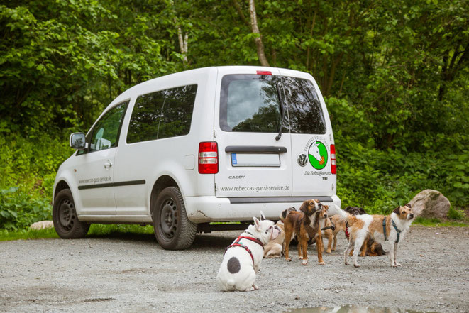 Die Hunde der Gassi Service Gruppe in Hamburg Altona vor dem VW Caddy