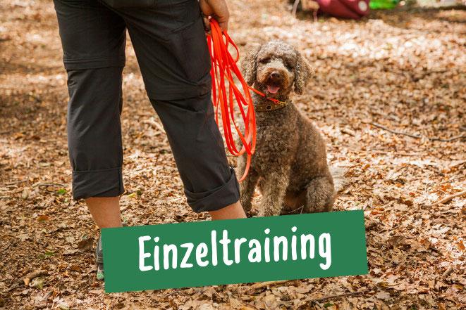 Hund beim Einzeltraining mit Besitzer