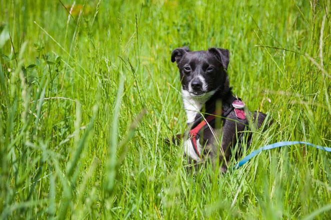 Hund sitzt im hohen Gras