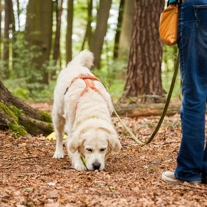 Hund sucht Futterspur