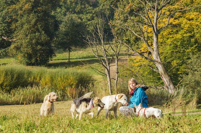 Hundetrainerin Rebecca aus Ottensen mit ihrer Hunde Gruppe vom Gassi Service Altona beim Spielen auf der Wiese