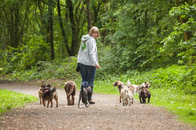 Rebecca vom Gassi Service mit der Hundegruppe im Wald in Hamburg