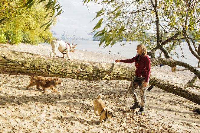 Rebecca mit Hunden am Elbstrand