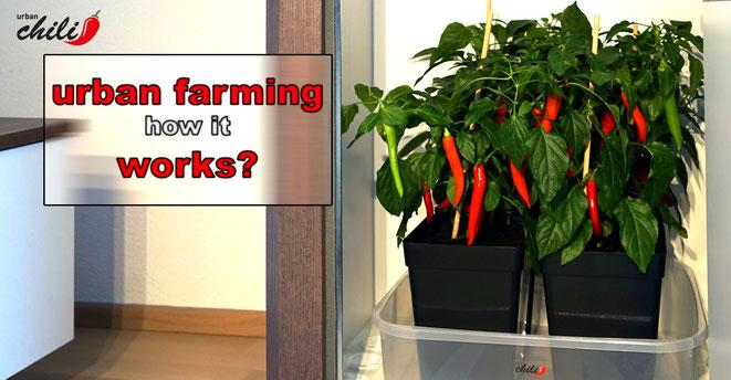 urban farming - how it works?