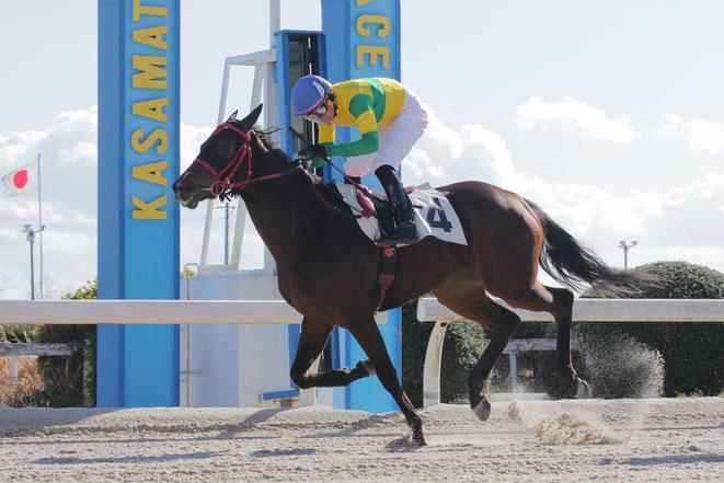 尾島徹調教師の地方競馬通算300勝を達成した「ボアソルチ号」 鞍上は佐藤友則騎手