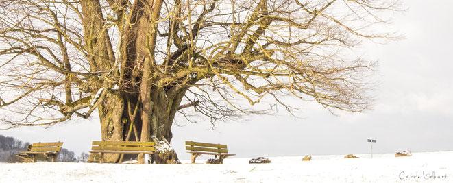 Im Sommer werden die Sitzbänke wohl auch nicht mehr so frei sein :-)