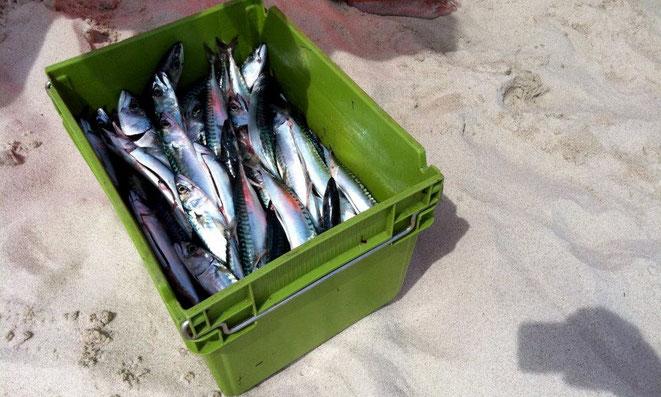 """Angebot und Nachfrage. Makrelenfang der """"alten Surfer"""" an Buhne 16"""