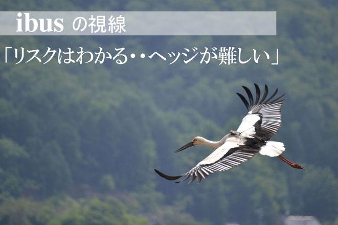 ibus  /   aiibus  コウノトリ