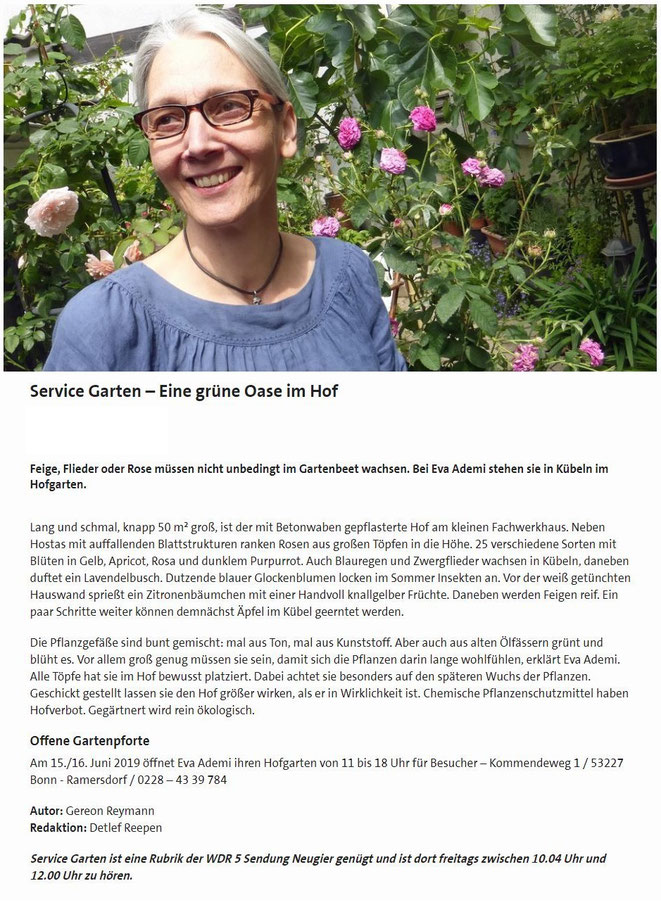 Betonwaben gepflastert Hof Fachwerkhaus Hostas mit auffallenden Blattstruckturen ranken Rosen Blüten in Gelb Apricot Rosa Purpurrot ökologisch gärtnern Garten