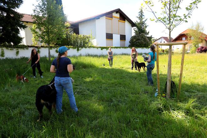 Hundeschule Animal Train, Linz Land, Neuhofen an der Krems, Hundeverhaltenstrainerin Sarah Lehner, Gruppentraining