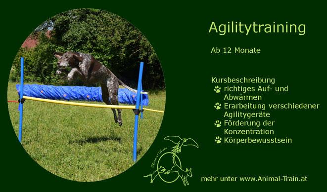 Agility, Hundeschule Animal Train, Hundetraining, Linz Land, Neuhofen