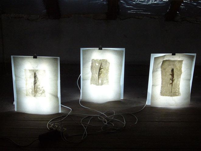 leuchtkästen, papier, wachs, federn