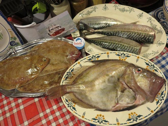 Godaille.com : Achat de poisson frais et sauvage en provenance directe du bateau de pêche - Canal Gourmandises